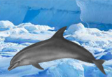 Antarctic Dolphin Escape