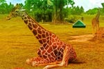 Escape Game African Zoo
