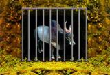 Escape Game Bull