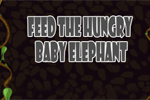 Feed The Hungry Baby Elephant
