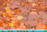 Hidden Object Insects