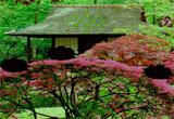 Seasonal Garden Escape