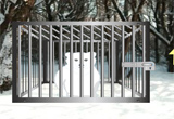 Snow Bear Forest Rescue