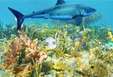 Underwater Treasure Escape